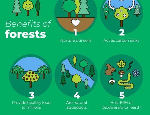 5 Manfaat Hutan untuk Masyarakat Dunia