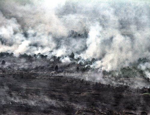 Jokowi Must Accept Forest Fires Verdict