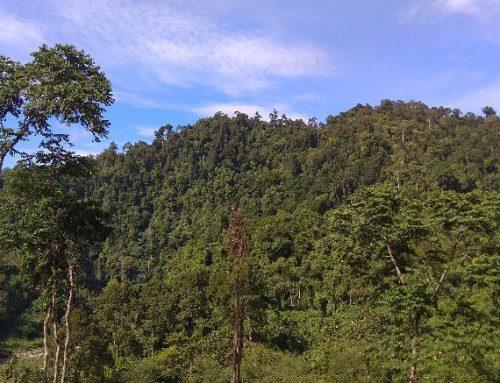 Perlindungan Hutan dan Gambut Harus Berlanjut