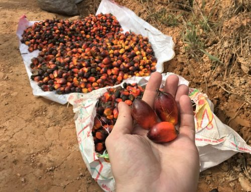 Indonesian Government Actively Blocking Palm Oil Reform
