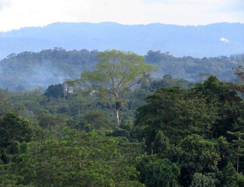 Indonesia Key to Saving World's Climate