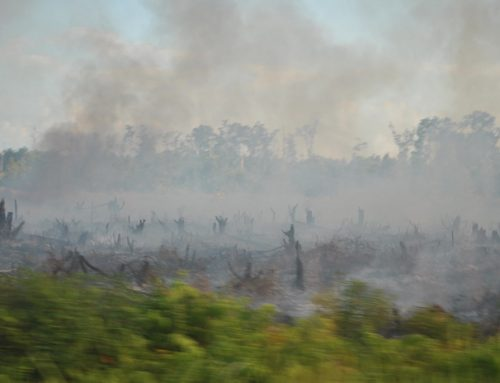 Ekonomi Kebakaran Hutan dan Lahan