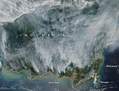 Investor Dunia Kritisi Kebakaran di Indonesia